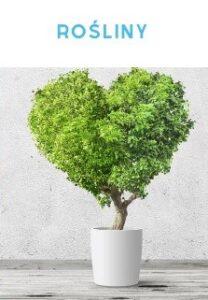 rosliny-domowe-sposob-na-suche-powietrze